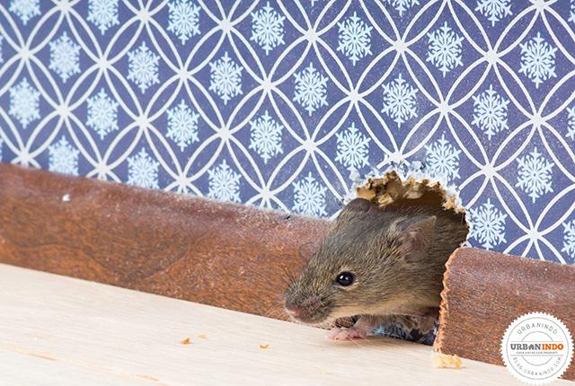 Bau Bangkai Tikus
