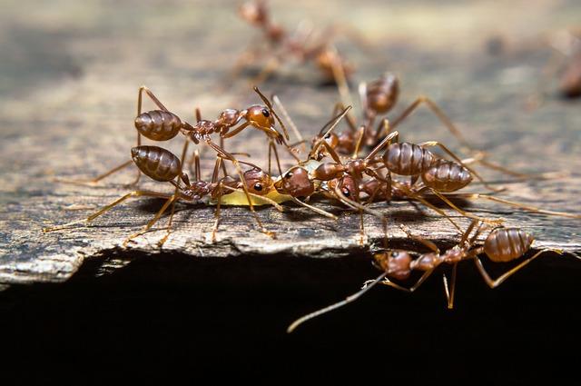 Cairan Pembasmi Semut dari Bahan Alami. Coba Buat, Yuk!