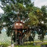 5 Rumah Pohon Paling Menakjubkan di Dunia, Suka yang Mana?