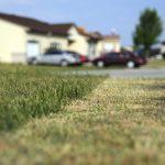 Tidak Cuma Disiram, Ini 6 Cara Menjaga Warna Rumput Tetap Hijau Segar