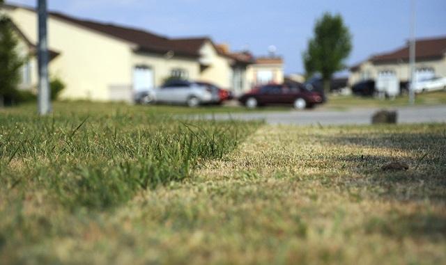 Tidak Cuma Disiram Ini 6 Cara Menjaga Warna Rumput Tetap