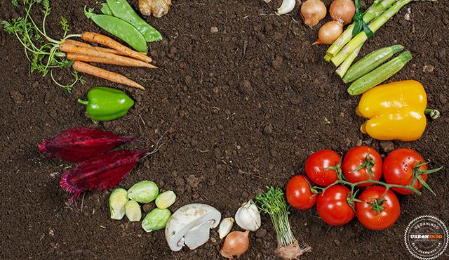 Sisa Sayuran