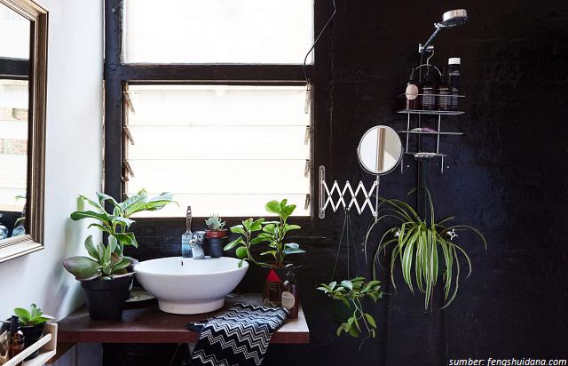 6 Tanaman Berdaun Ini Bisa Tahan Disimpan di Ruangan yang Gelap