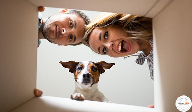 Survei: Alasan Membeli Rumah dari Kaum Millenial AS Adalah Anjing Peliharaan