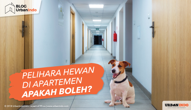 Bolehkah Pelihara Hewan di Apartemen dan Bagaimana Aturannya?