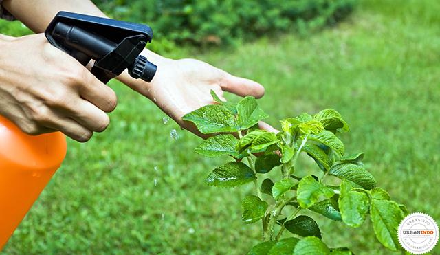 Pestisida Organik