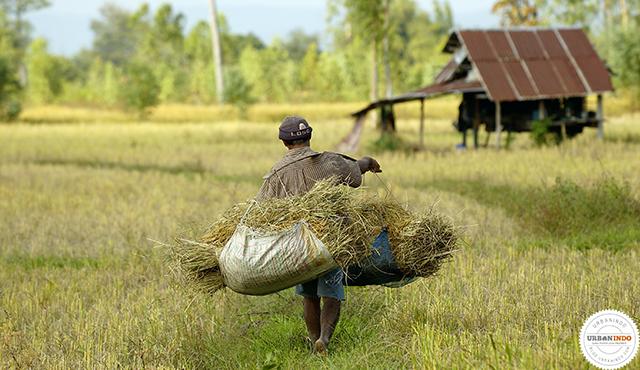 Tanah Belum Dikembalikan Negara, Kakek Ini Ikhlas Hidup Seadanya