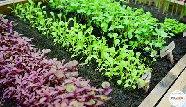 Cara Membuat Kebun Minimalis 1 M2 di Rumah (Desain Hingga Bibit Pilihan)